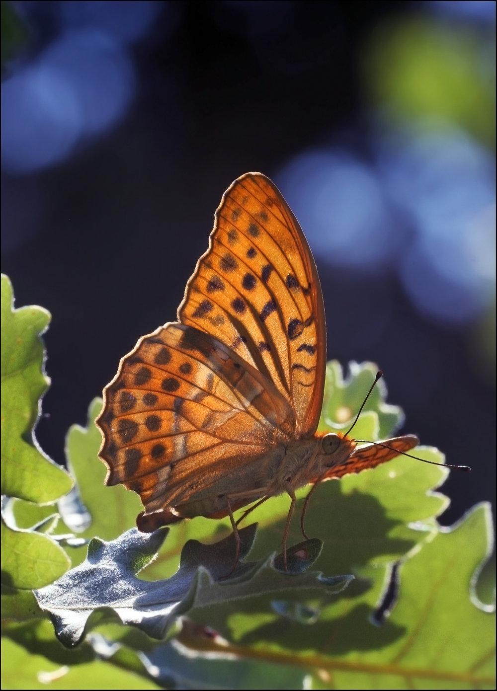 Nature-88.jpg