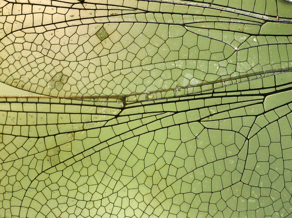 Nature-98.jpg