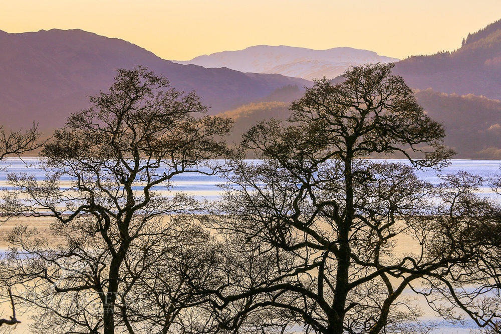 Trees overlooking Loch Venachar at Dusk