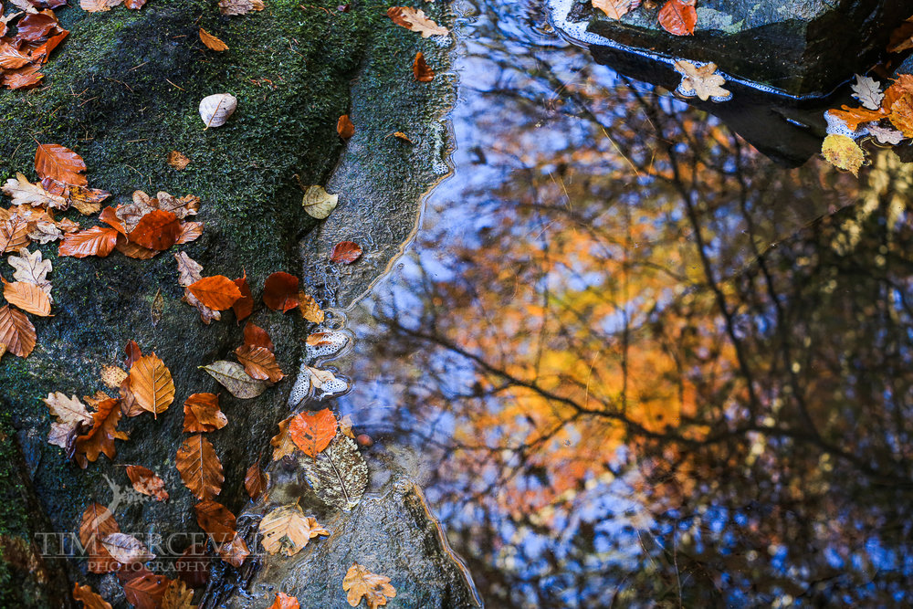 Autumn Leaves in a rock pool at The Birks of Aberfeldy
