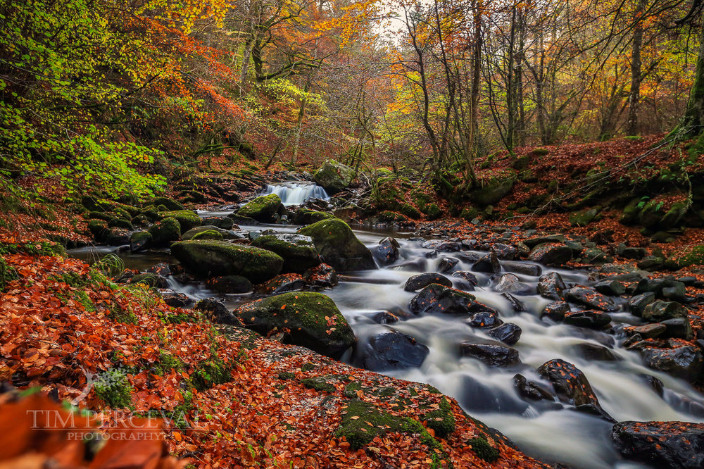 Autumn Leaves at The Birks of Aberfeldy