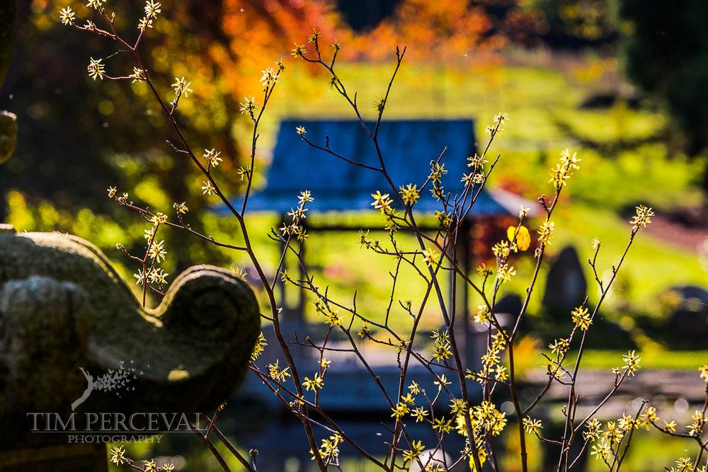 The Japanese Garden, Cowden, Scotland