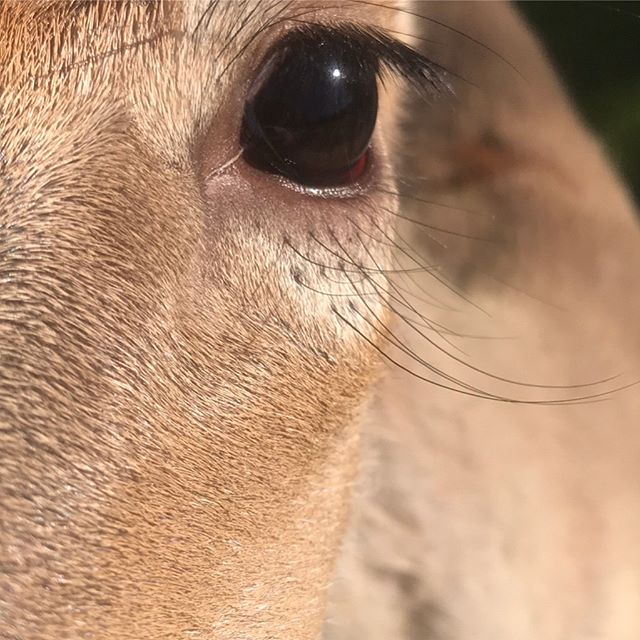 One of the craftsman I met @woodendeavor this morning. Shows their eye for detail. One never knows what will turn up in Brownsville. #stayalert #expecttheunexpected #whitetaildeer  #attentiontodetail