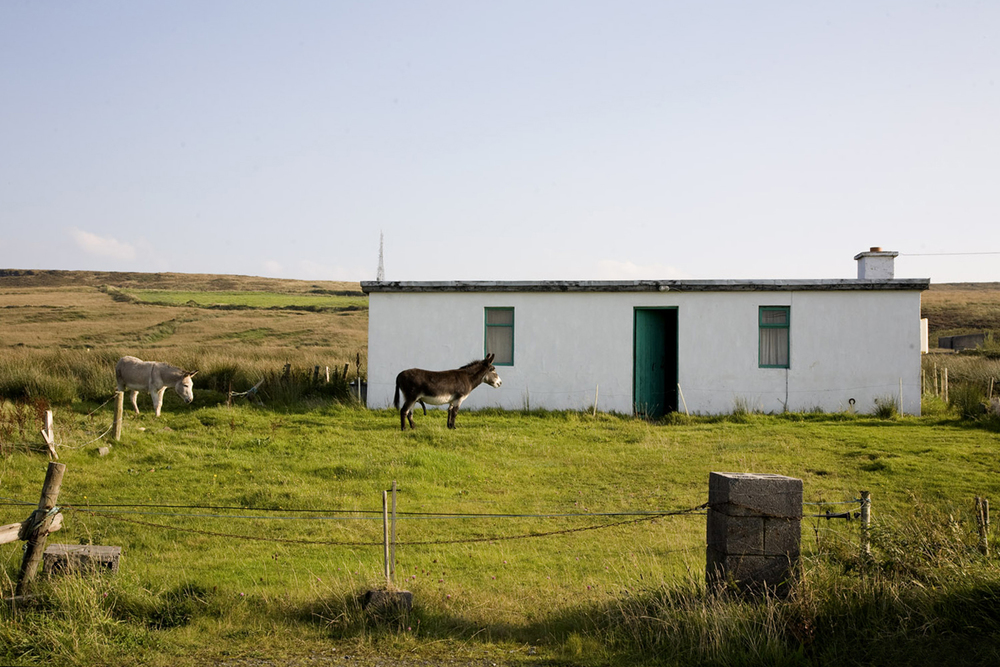 A documentary photograph of donkeys outside a farm house in the west of ireland