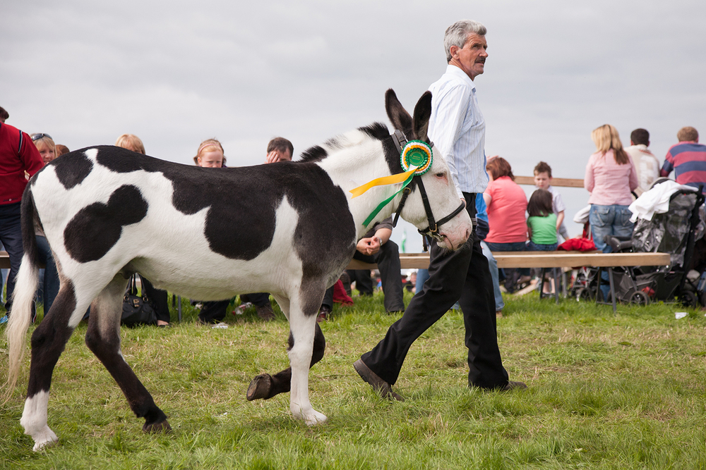 A documentary photograph of a man walking with his prize winning donkey at an agricultural show in the west of ireland