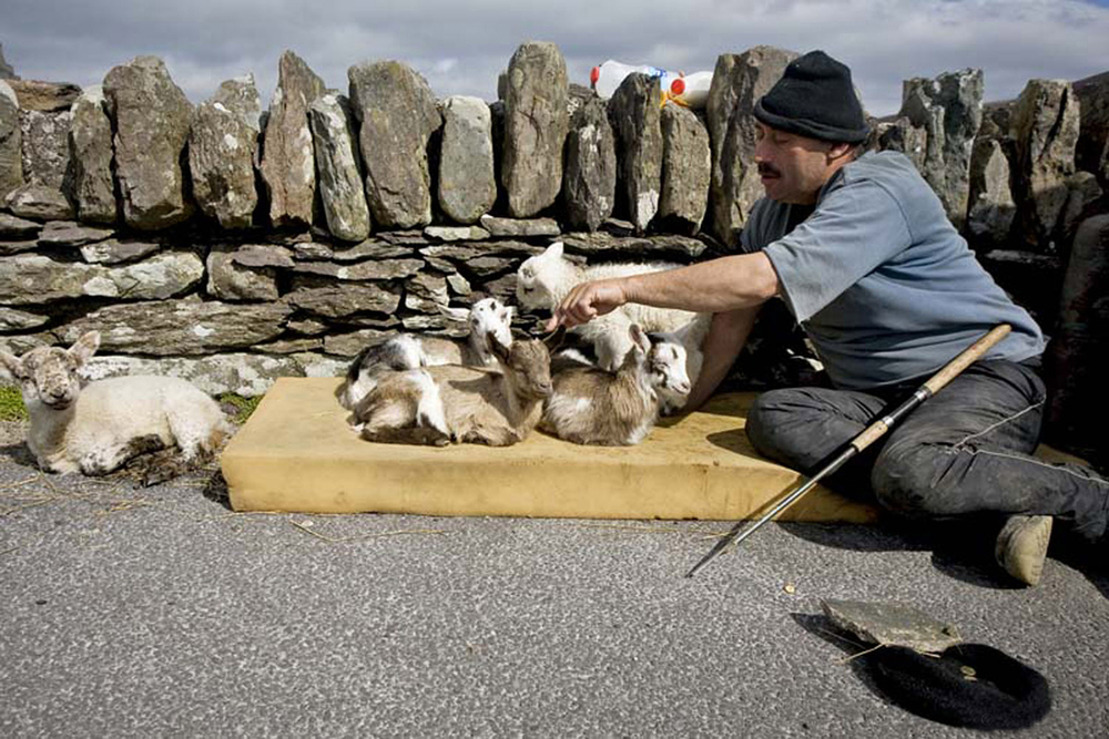 A documentary photograph of a man with baby goats at a tourist site in the west of ireland