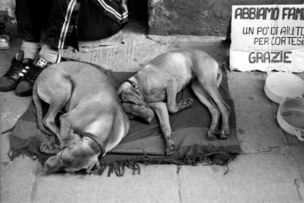A documentary photograph of a man begging for money with two dogs in Italy