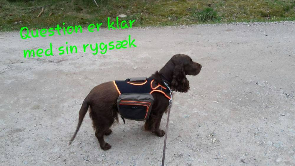 Selv hundene får rygsæk på så de kan bære deres egen mad