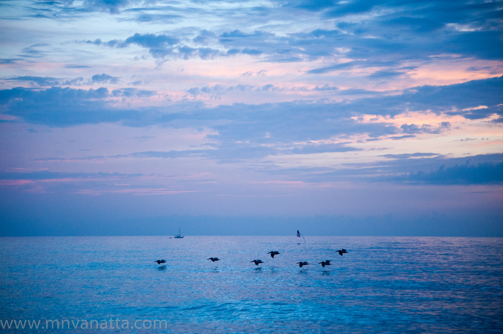 Pelicans Sail Boat (2).jpg