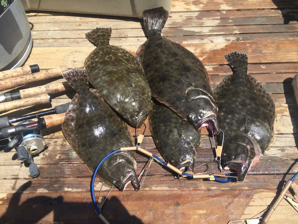 Southern flounder from a trip in May, 2015.
