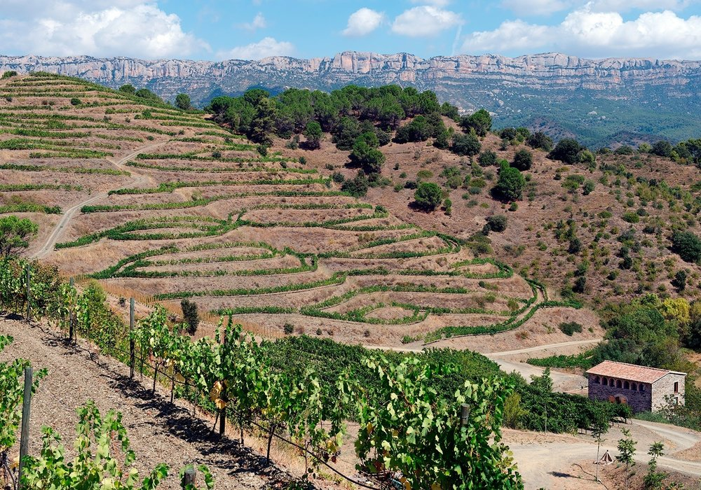 Priorat-Wine-2b.jpg