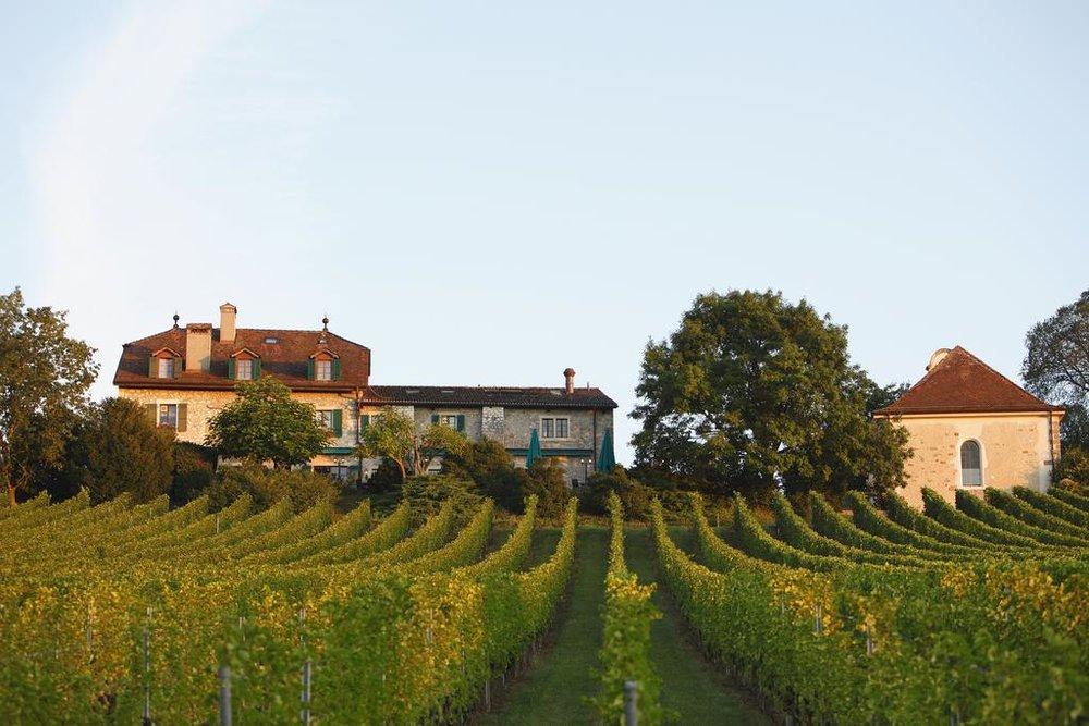 Vineyard beauty at Domaine de Châteauvieux