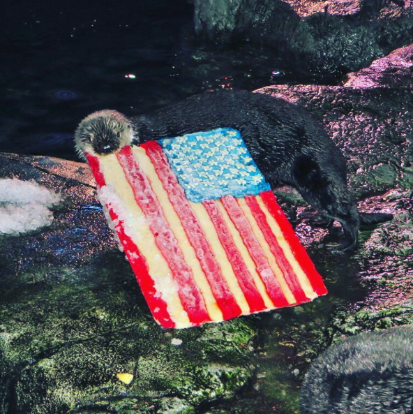 making sure their residents know what patriotism is (via  @aquariumpacific )