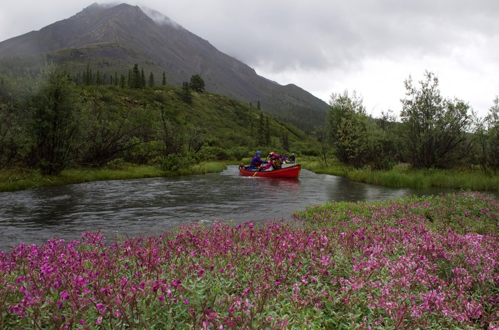 Mountain River Fireweed Paddlers.jpg