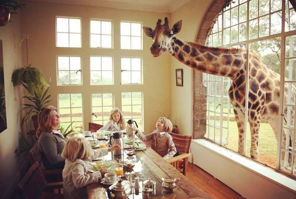 giraffe through the window.jpg