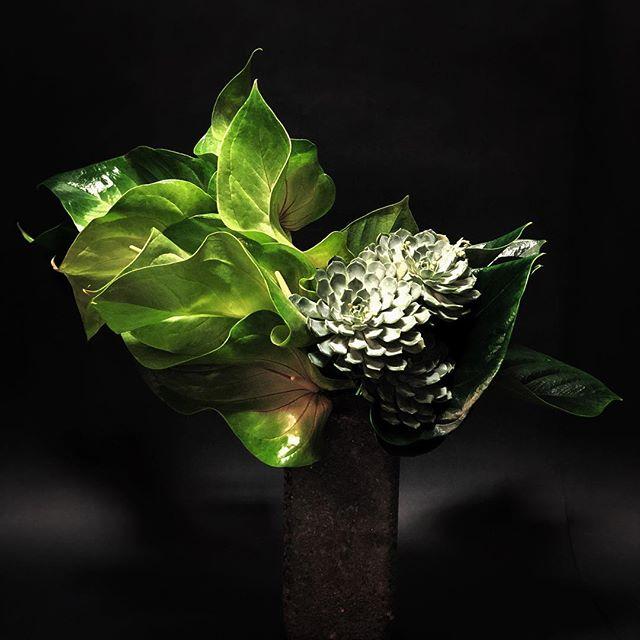 Masculine, custom-made arrangement • #anthurium #succulents #customdesign #nicolascogrel