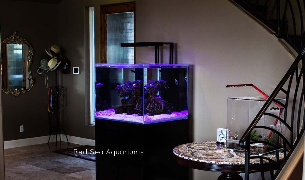 Copy of Red Sea aquariums
