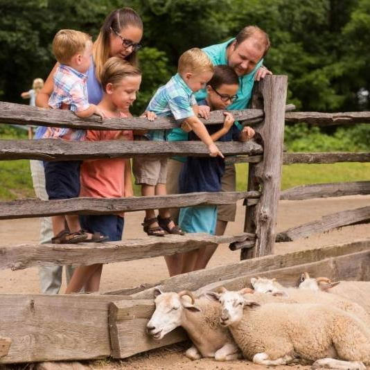 OSV 032819 Family Farm Fest Visitors and sheep.jpg