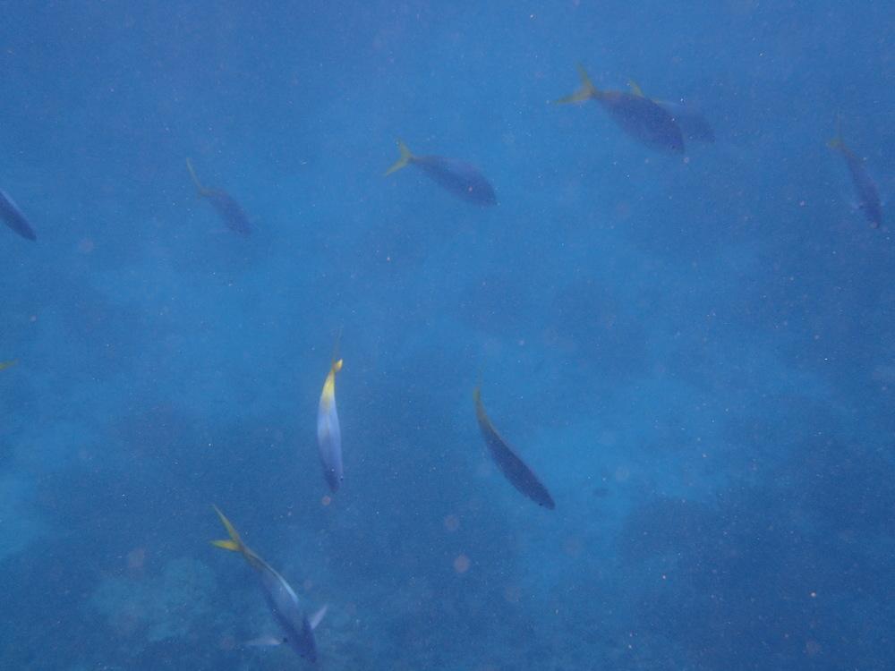 Underwater adventures...