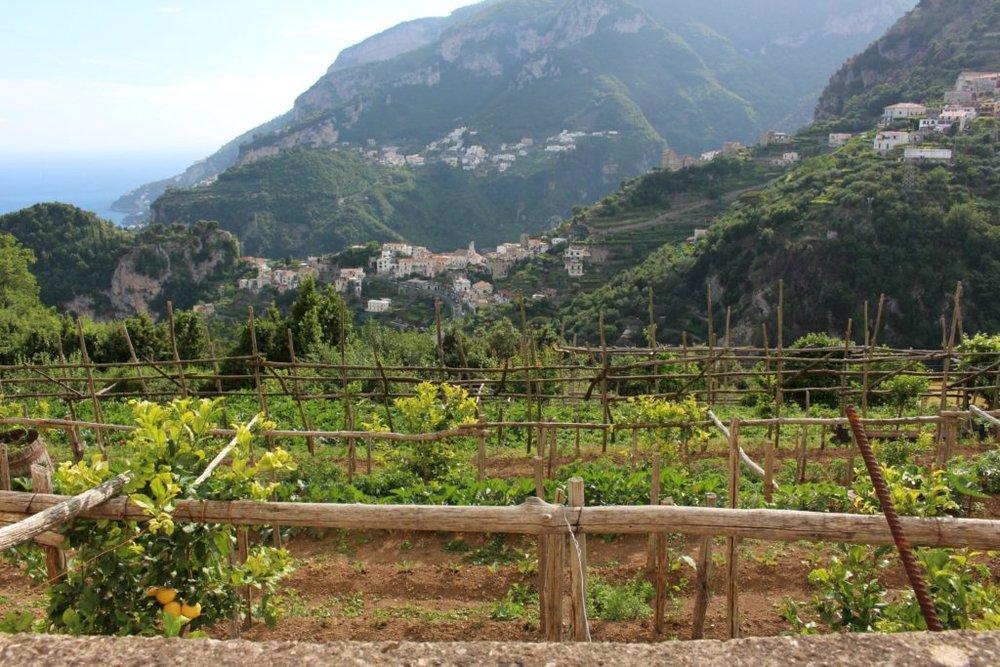 Our hotel's garden on the Amalfi Coast.