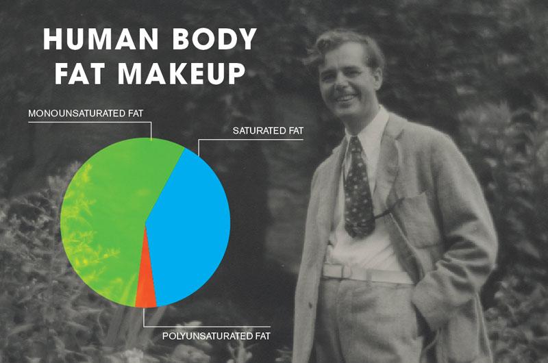 human-body-fat