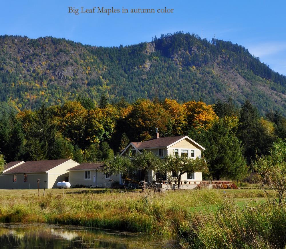 BERGMAN Farm 7-fall.jpg