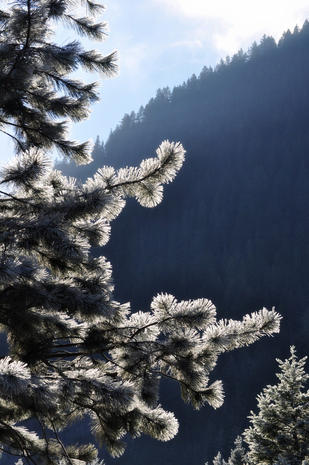 winter frost.JPG