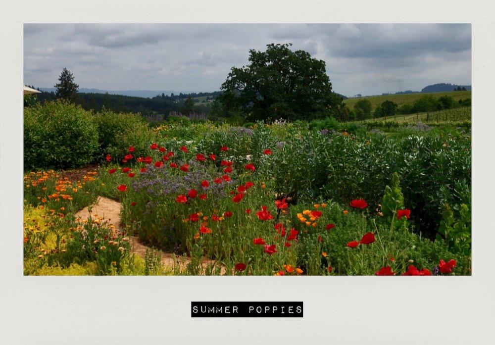 instant poppies.jpg
