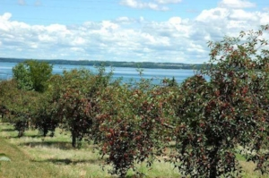 Traverse City, Michigan is known as the cherry capital of the world.