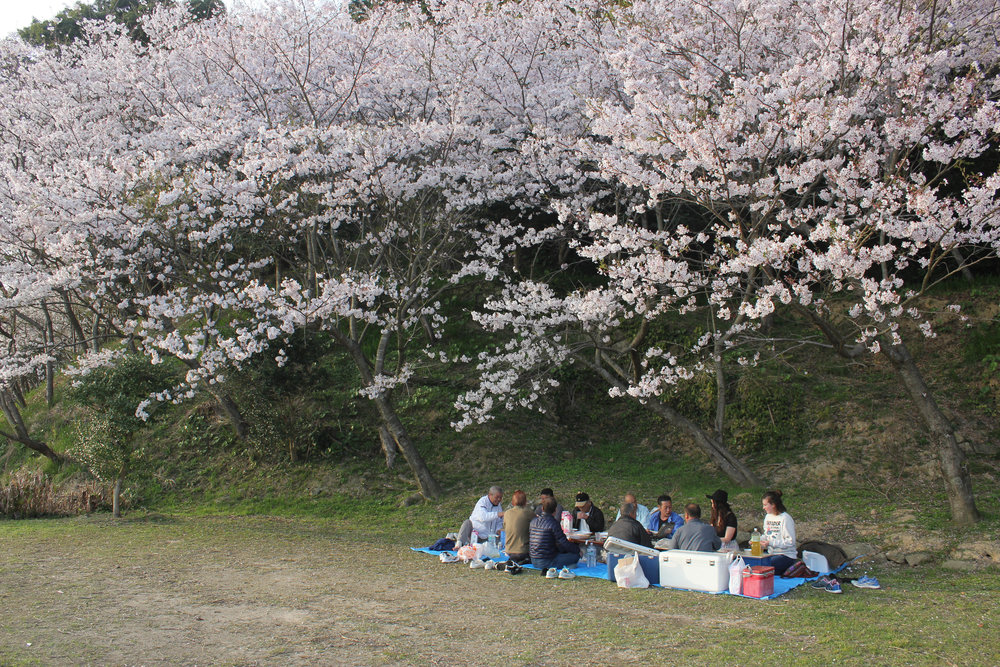 A hanami we were invited to as we walked by on the way to our photoshoot (see below pictures). We were told we had to try the fish that was just caught this morning-- a Goto delicacy. And of course our plastic cups of beer were never empty.