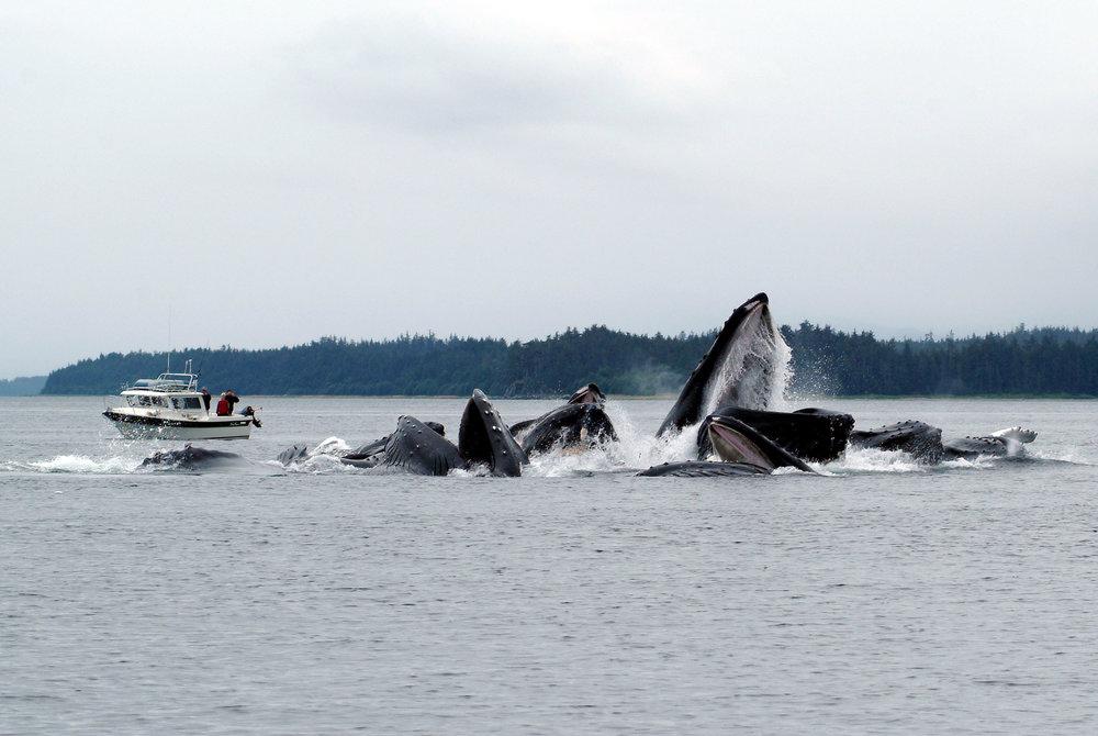 whalesp-2500-q60.jpg