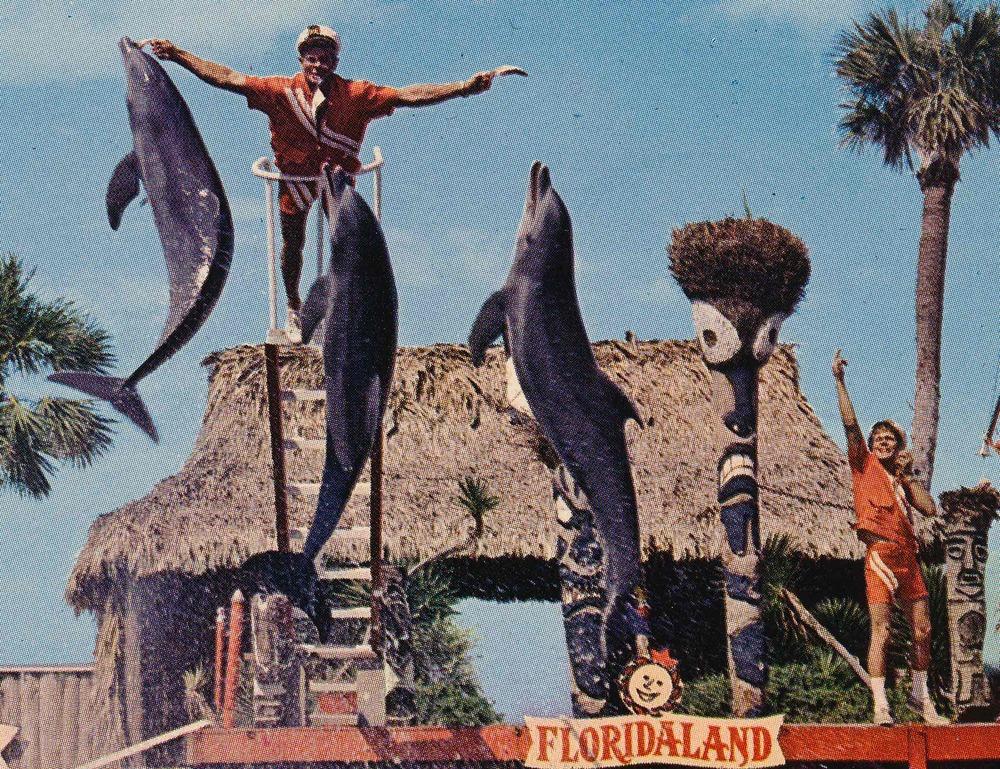 dolphin lover_1_.jpg