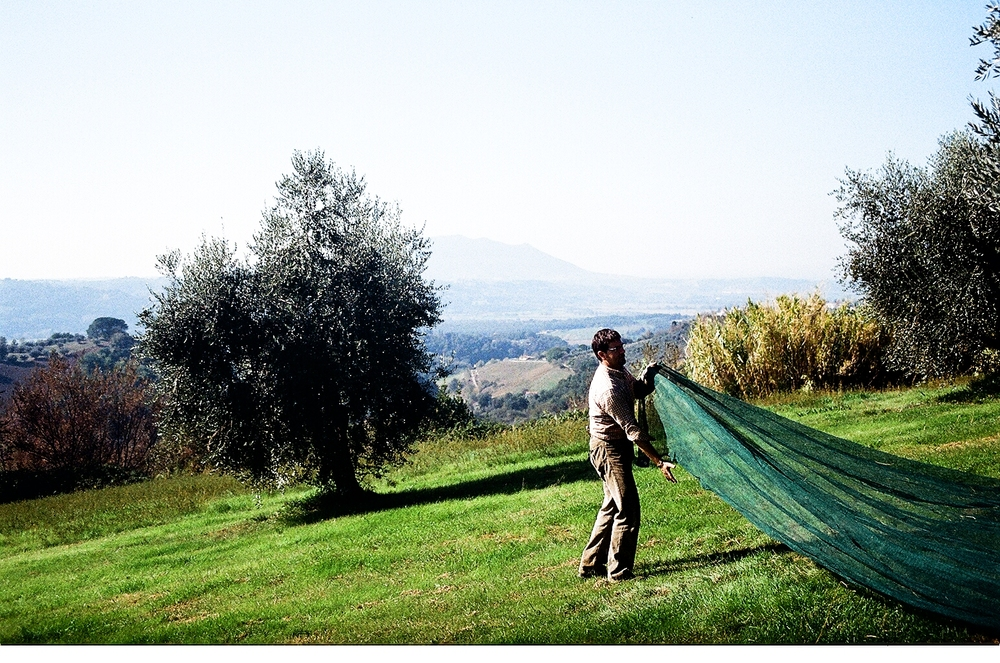 Olive net.JPG