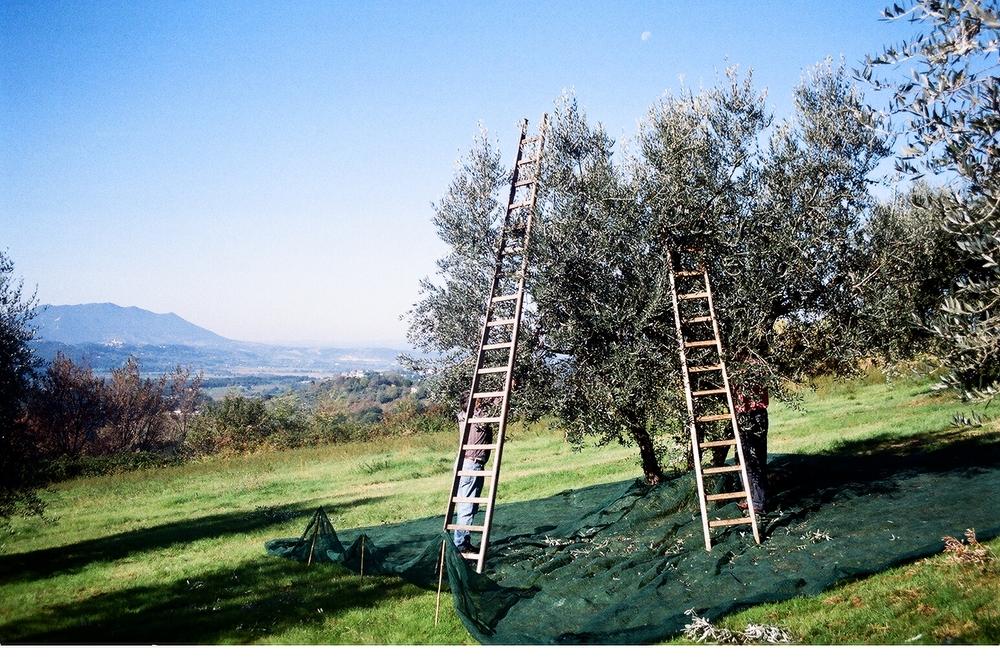 ladders & Soratte '10.JPG