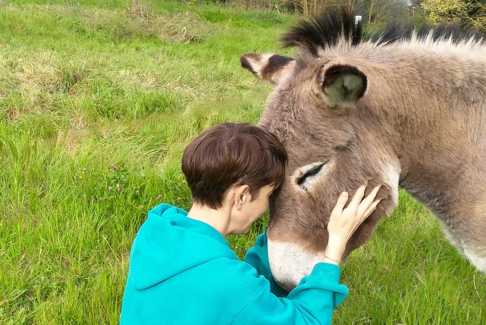 Donkey, La Casa Nettarina, neighbours.jpeg