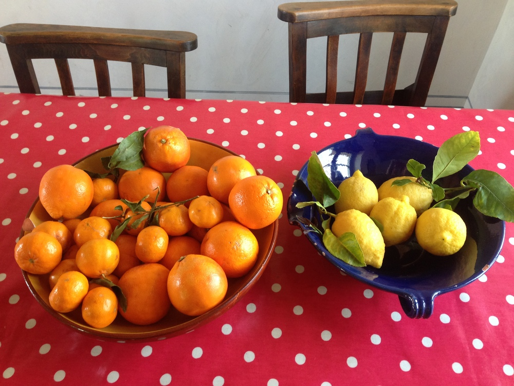 citrus fruits, winter.JPG
