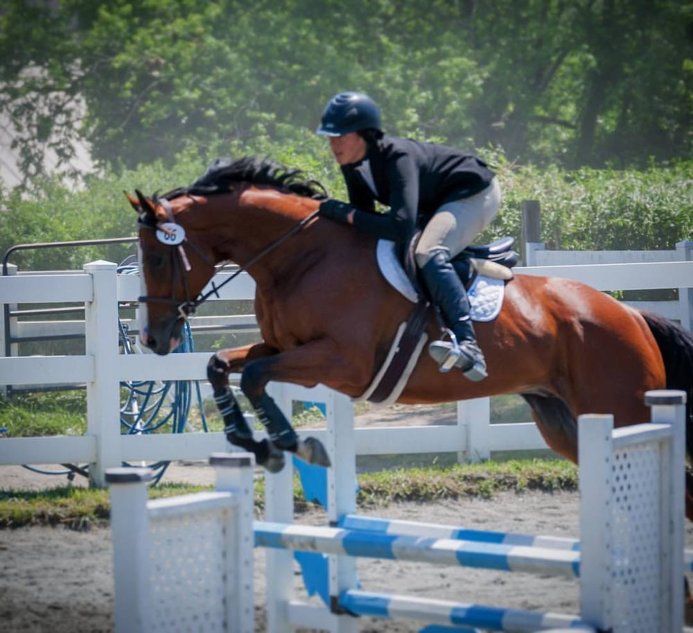 Shy Humor  By Sharp Humor out of Black Bacardi  2009, 15.3h, gelding. As a race horse 'Funny' had 18 career starts -He has been off the track since 2013 and has been showing in the 1m jumpers. Funny is very brave, big step to get down the line while remaining very adjustable and he just loves competing. He shows the talent to move up and stay clean up through the high child/adult amateur jumpers. (Lead change, clips, good for the farrier, loads)  Priced at $12,000  Please contact Priscilla 484-667-6187