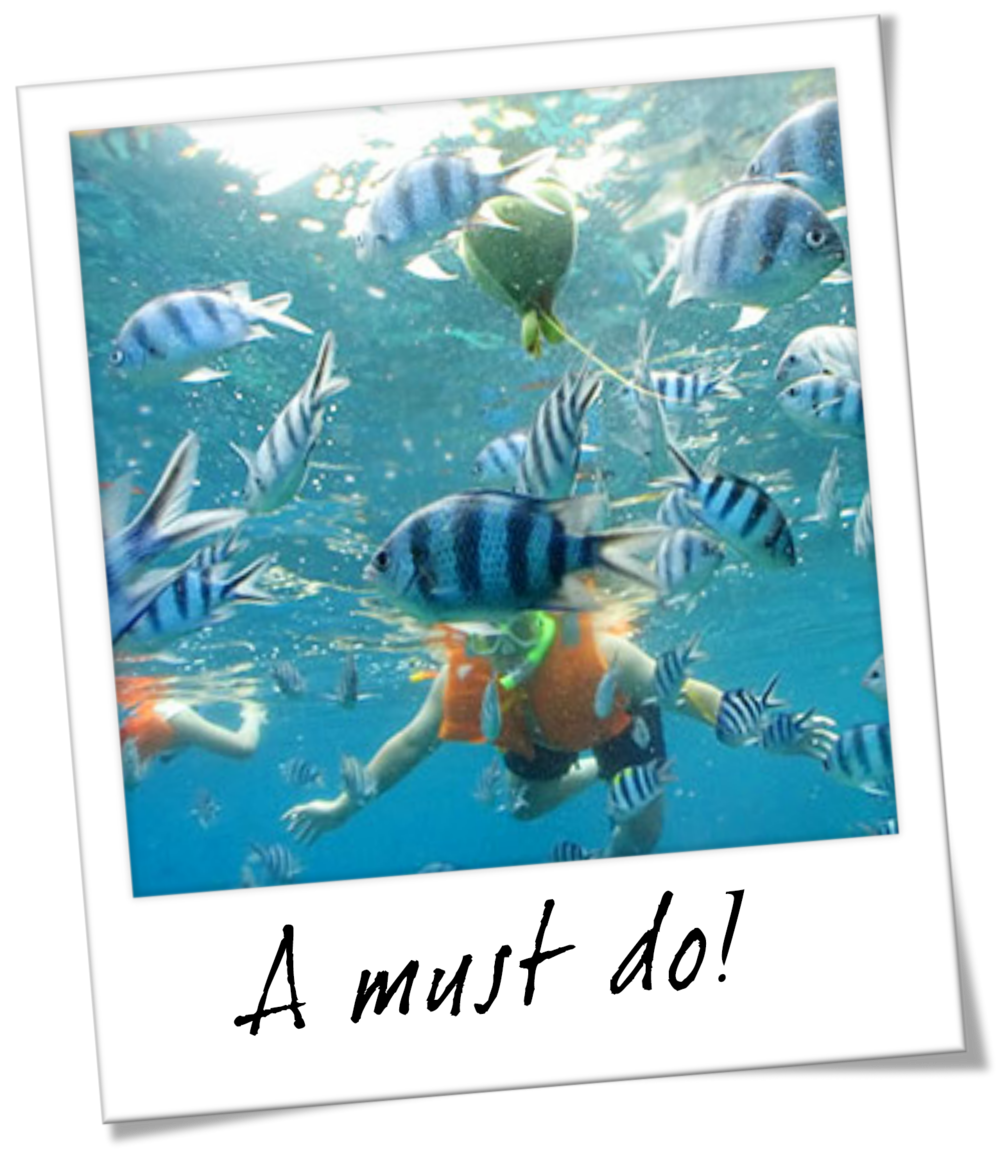 Snorkeling at Haunama Bay - Oahu Hawaii Travel Guide