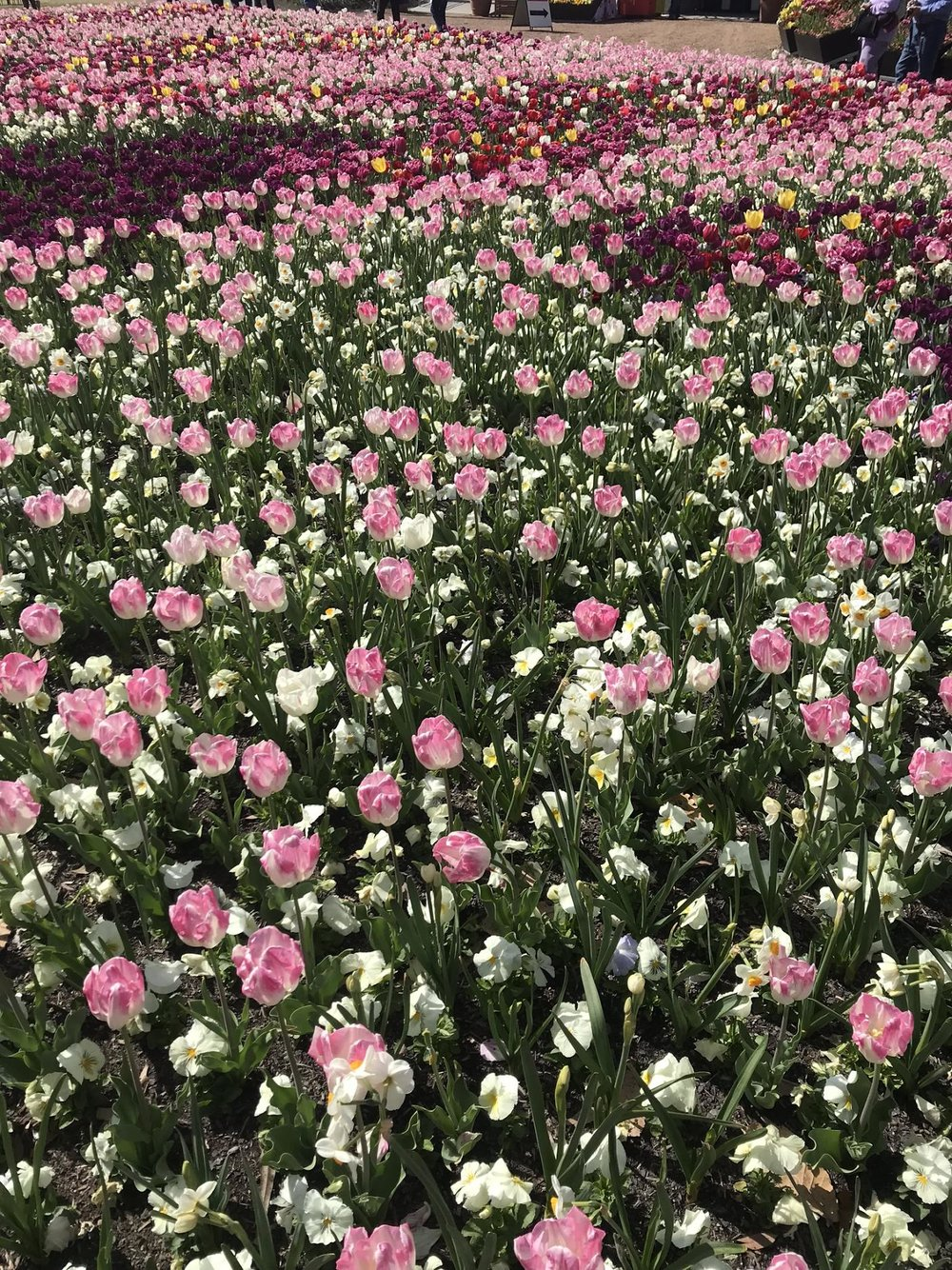 Weekend Guide to Canberra - What to See, Floriade