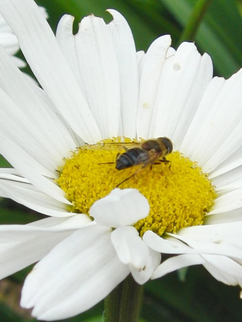 flower-02_3925815079_o.jpg