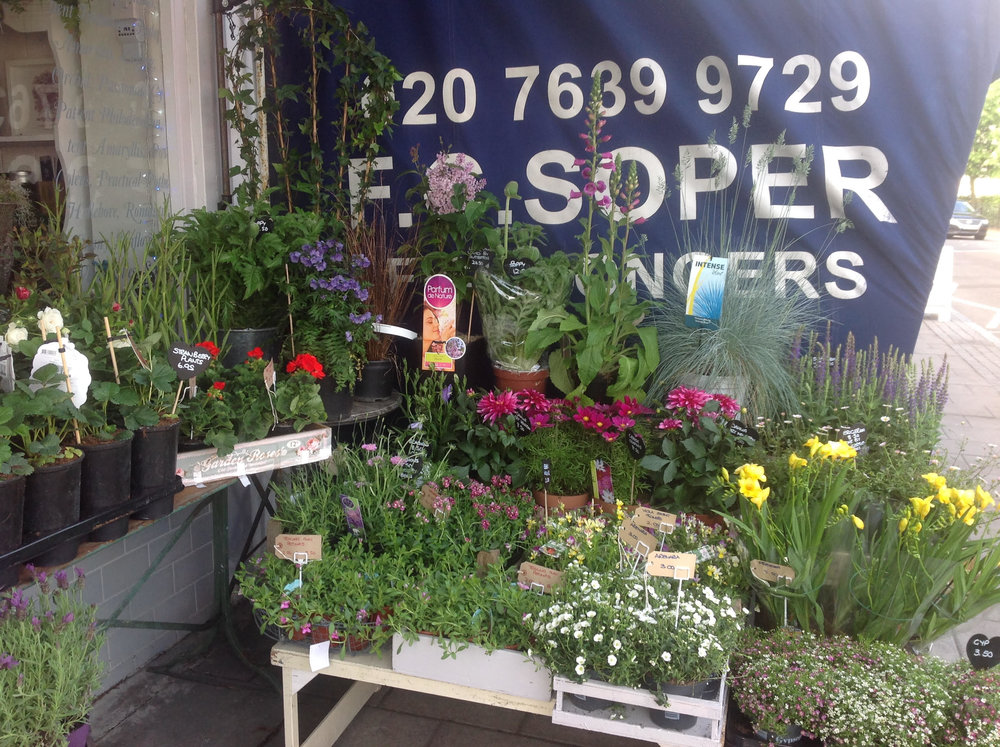 A.G. Flowers Florist in Nunhead South London Club 2.jpg