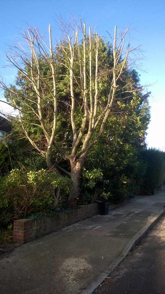 Aureus Tree Services in South East London South London Club Card  5.jpg