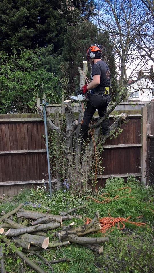 Aureus Tree Services in South East London South London Club Card 2.jpg
