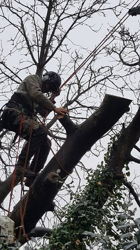 Aureus Tree Services in South East London South London Club Card.jpg
