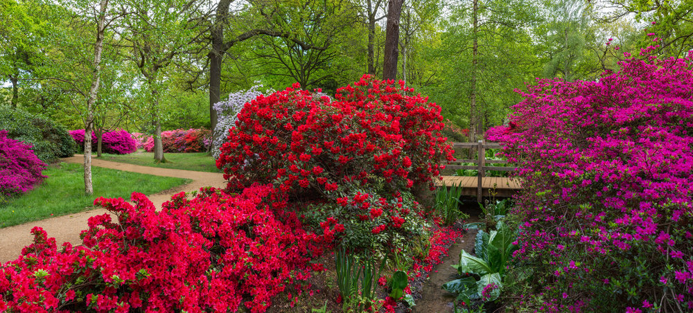 Isabella_Plantation_Stream_2,_Richmond_Park,_London,_UK_-_Diliff.jpg