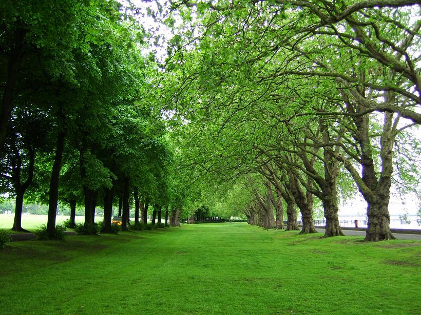 wandsworth park.JPG