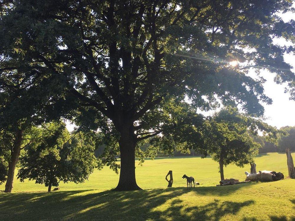 Hilly Fields 4.jpg