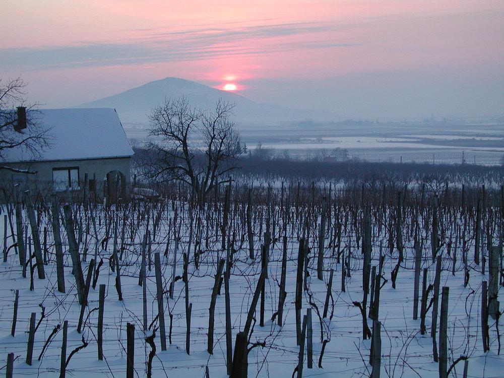 Wanderlust Wines 3.JPG