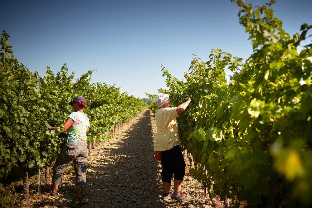 Wanderlust Wines 6.jpg