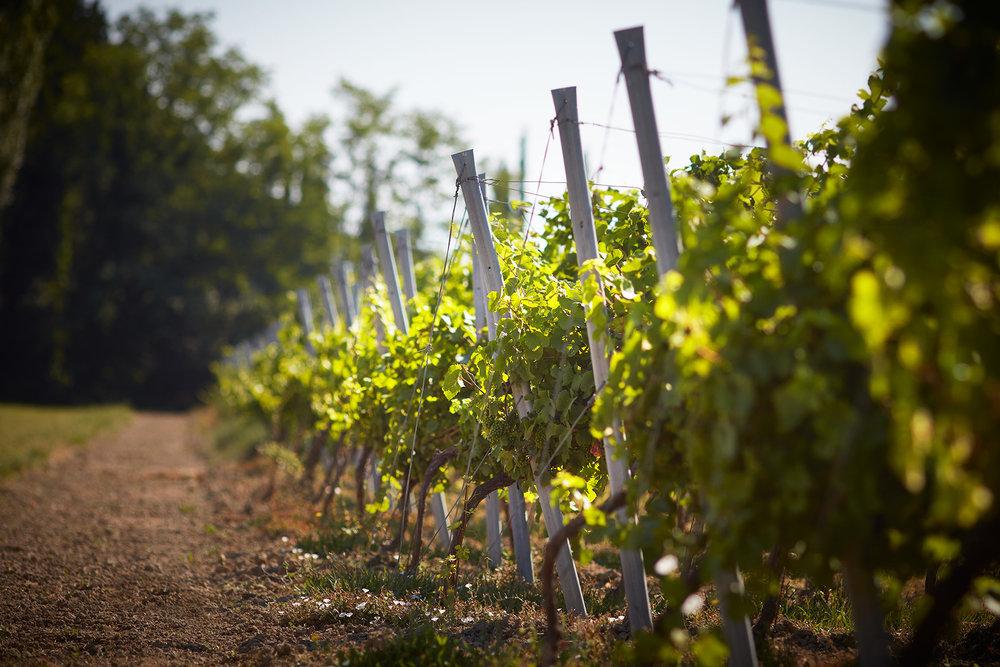 Wanderlust Wines 7.jpg